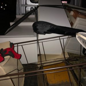 【川口市】カラーボックス、椅子、テレビ台、ギター等の回収・処分