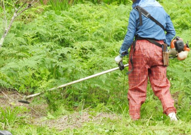 川口市で草刈りにかかる料金相場は?追加料金や業者選びのコツまで解説