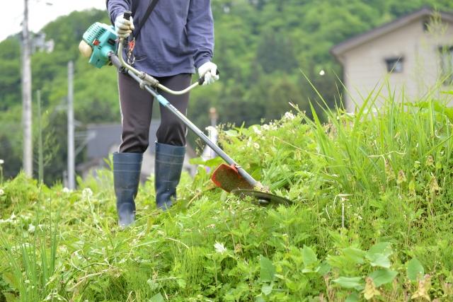川口市で草刈りに最適な年3回の時期~楽に草刈りを終えるコツまで徹底解説